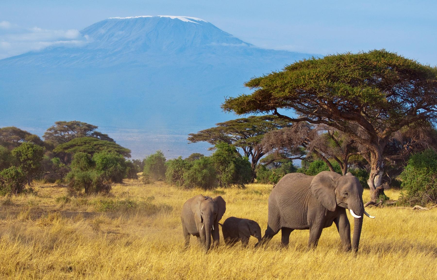 Vacaciones en familia 2021 en Tanzania
