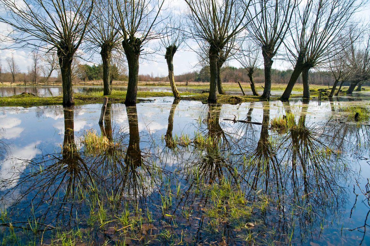 Wakacje na Mazowszu to relaks na łonie przyrody