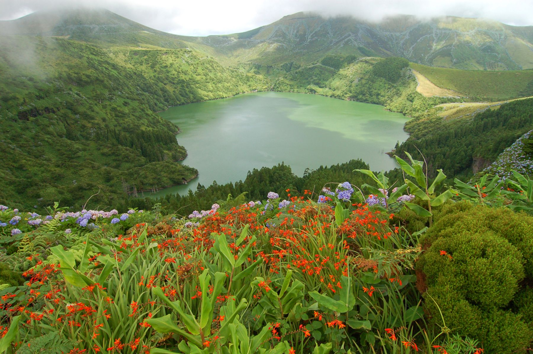 Picture shows a natural lake in the Azores, taken from a high viewpoint overlooking the lake, with brightly coloured red, purple and green plants and flowers in the foreground. The sun is shining but there is fog over the lake and you can see lush forests surrounding it.