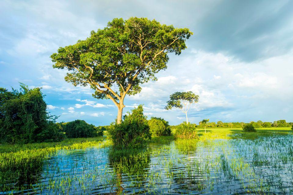 Die schönsten Reiseziele Brasiliens: Amazonasbecken bei Manaus, Amazonas