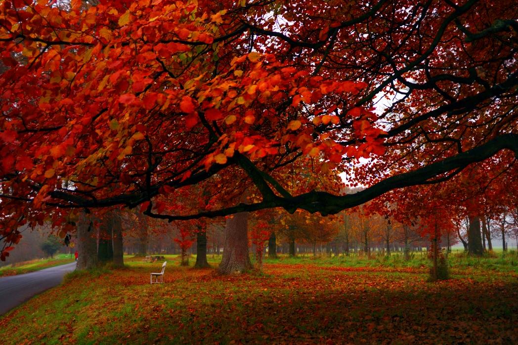 The Phoenix Park Dublin