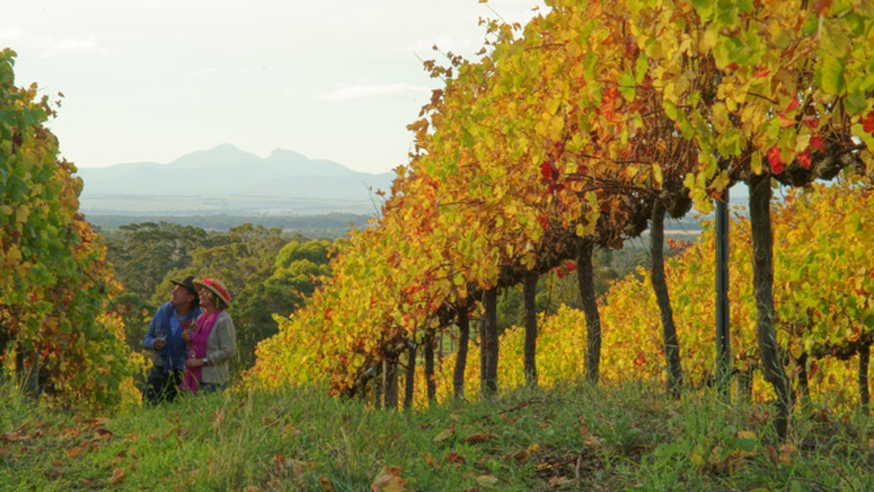 Couple enjoying wine country