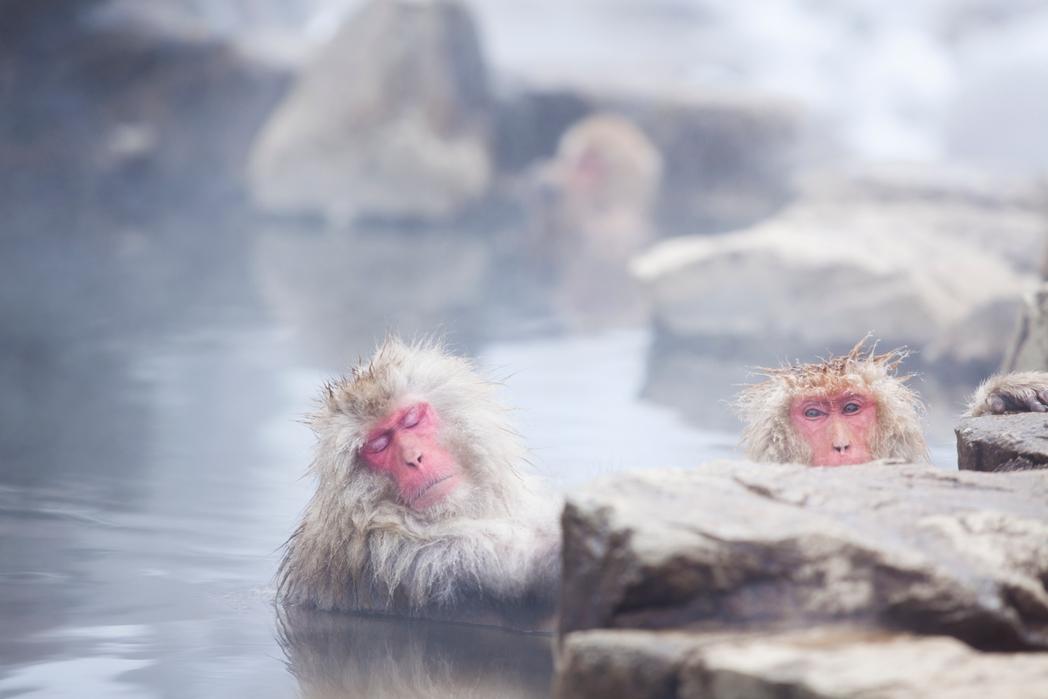 Μαϊμούδες του χιονιού στην Ιαπωνία. Χειμερινοί προορισμοί εκτός Ευρώπης