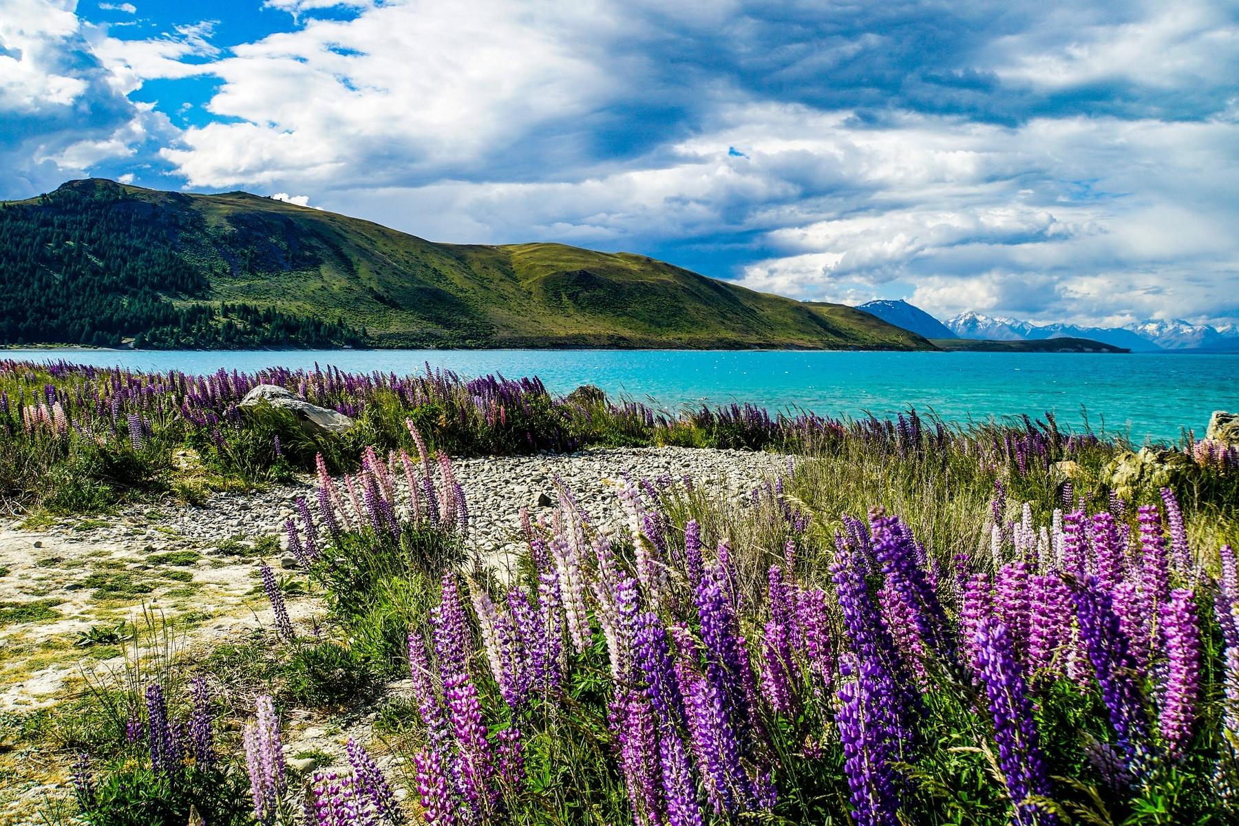 Страны мечты: путешествие в Новую Зеландию