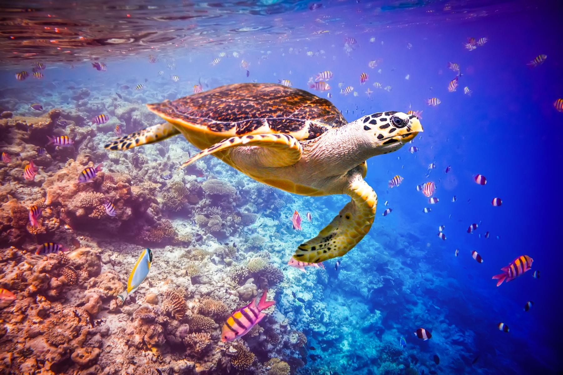 Куда можно полететь летом: Мальдивские острова
