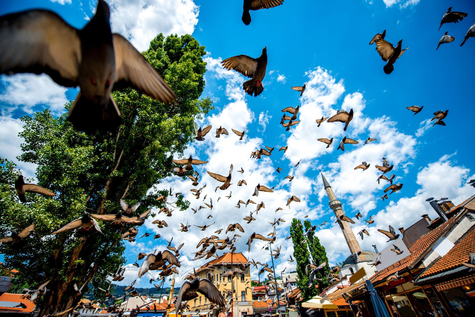 Πουλιά πετούν πάνω από το παζάρι του Σεράγεβο.