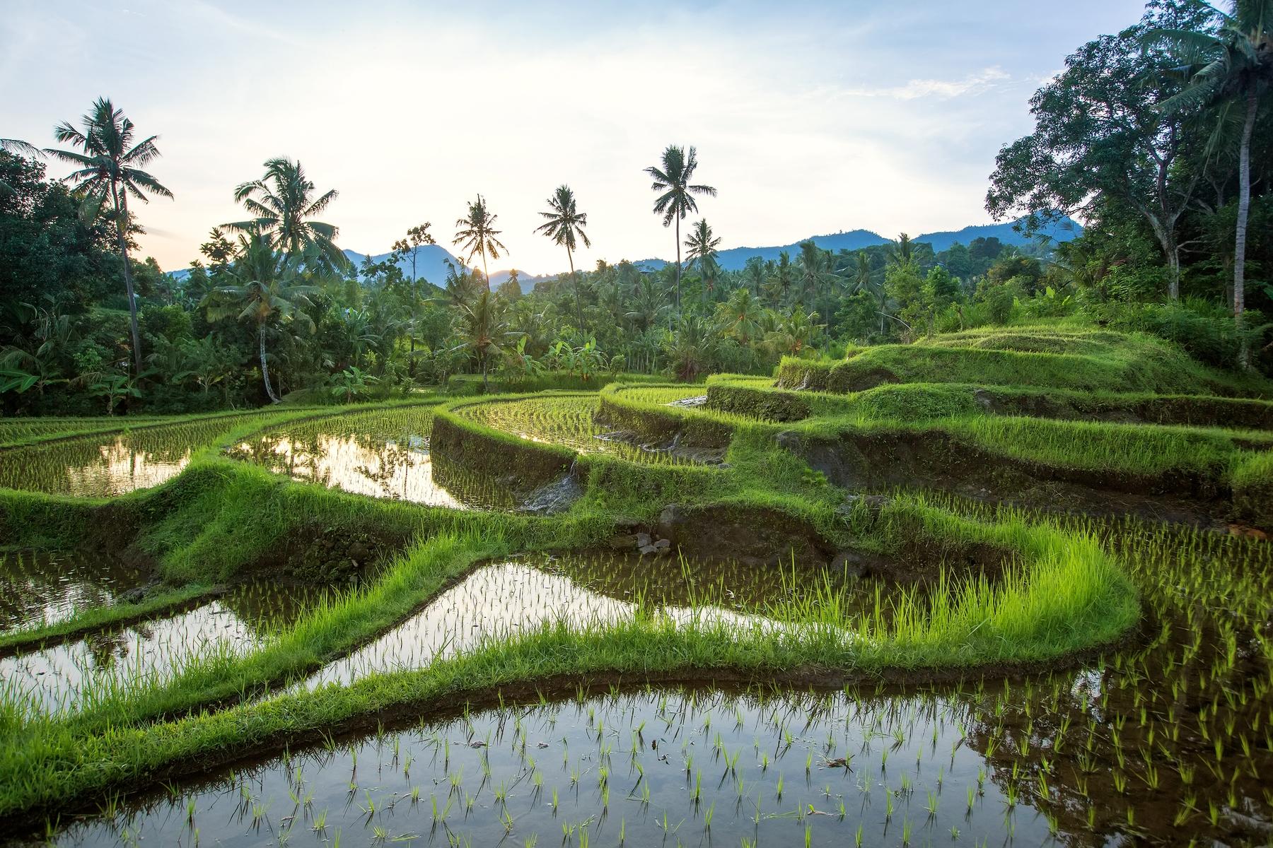 Vacaciones baratas: 17 destinos económicos: Bali