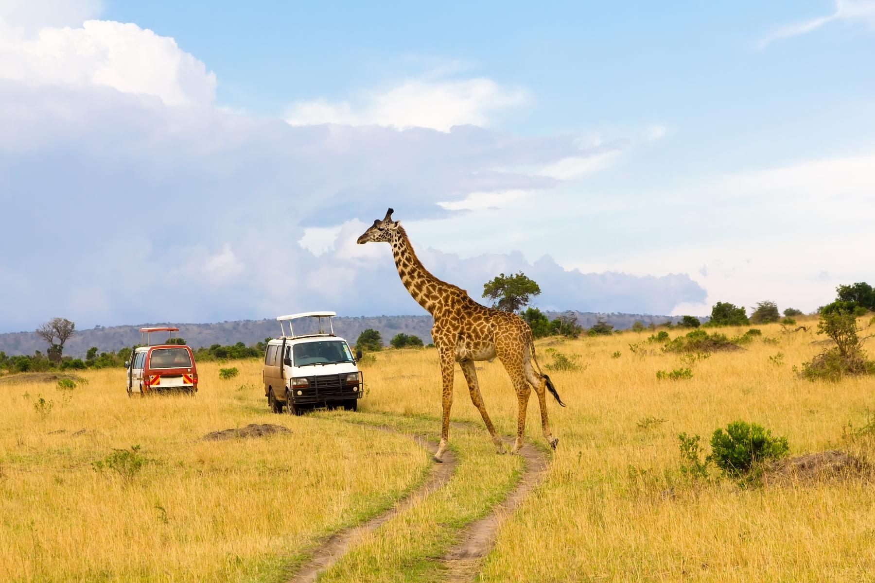 Неожиданные направления для отпуска: летим в Кению!