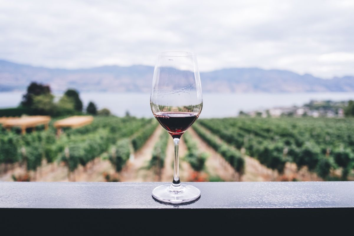 glass of red wine in the okanagan valley wine county in British Columbia