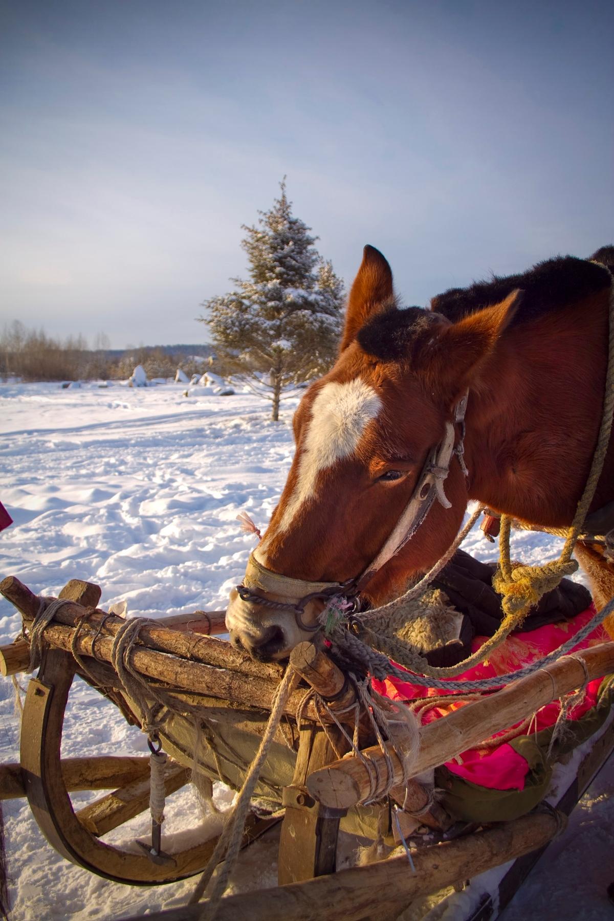 Άλογο στα χιόνια στο Χαρμπίν της Κίνας - οι καλύτεροι χειμερινοί προορισμοί στο εξωτερικό