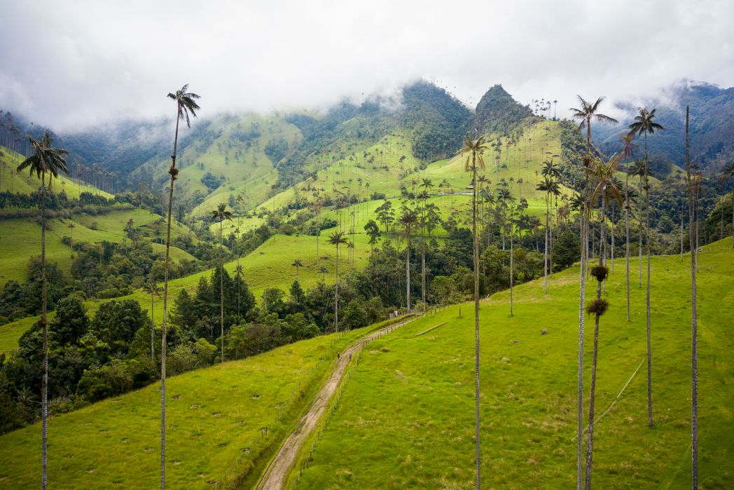 View from Valle de Cocora in Colombia's coffee triangle - tastes of Colombia