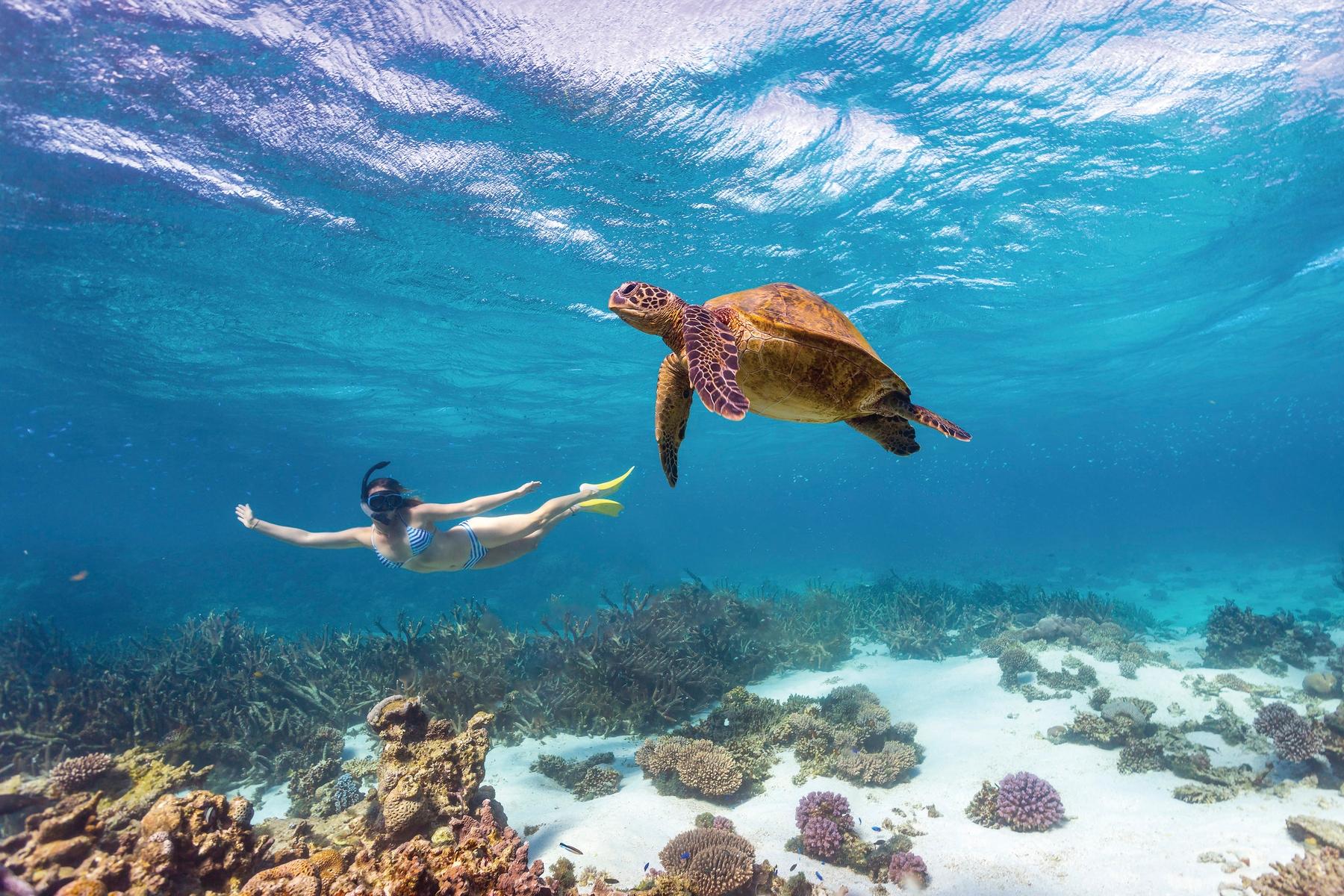 sea turtle in Queensland