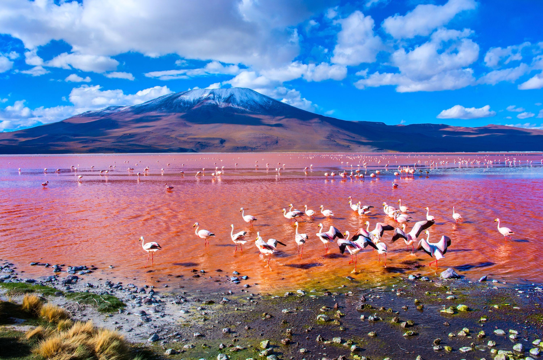 Лагуна-Колорадо, Боливия