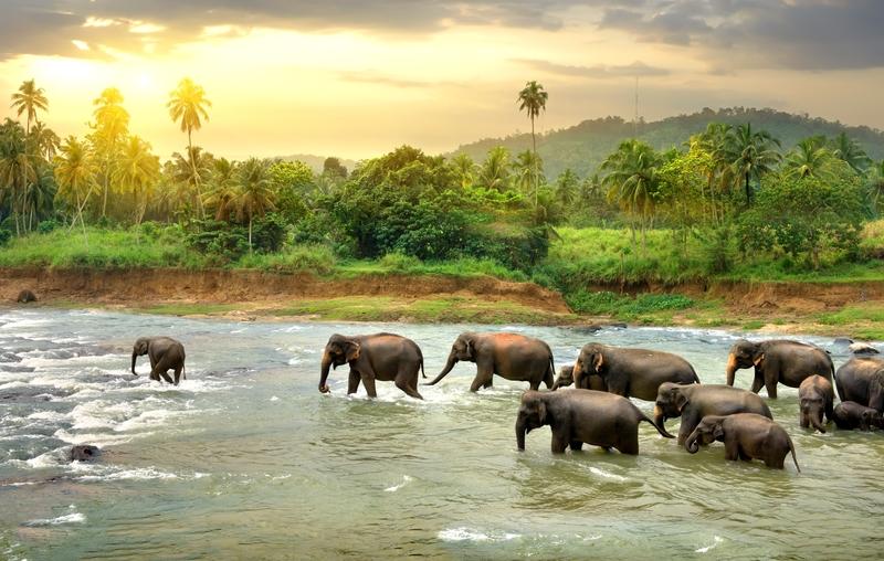 elefanter korsar flod