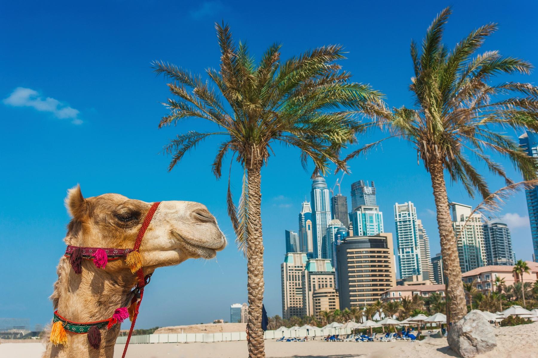 Куда поехать на отдых с семьей: билеты в Объединенные Арабские Эмираты
