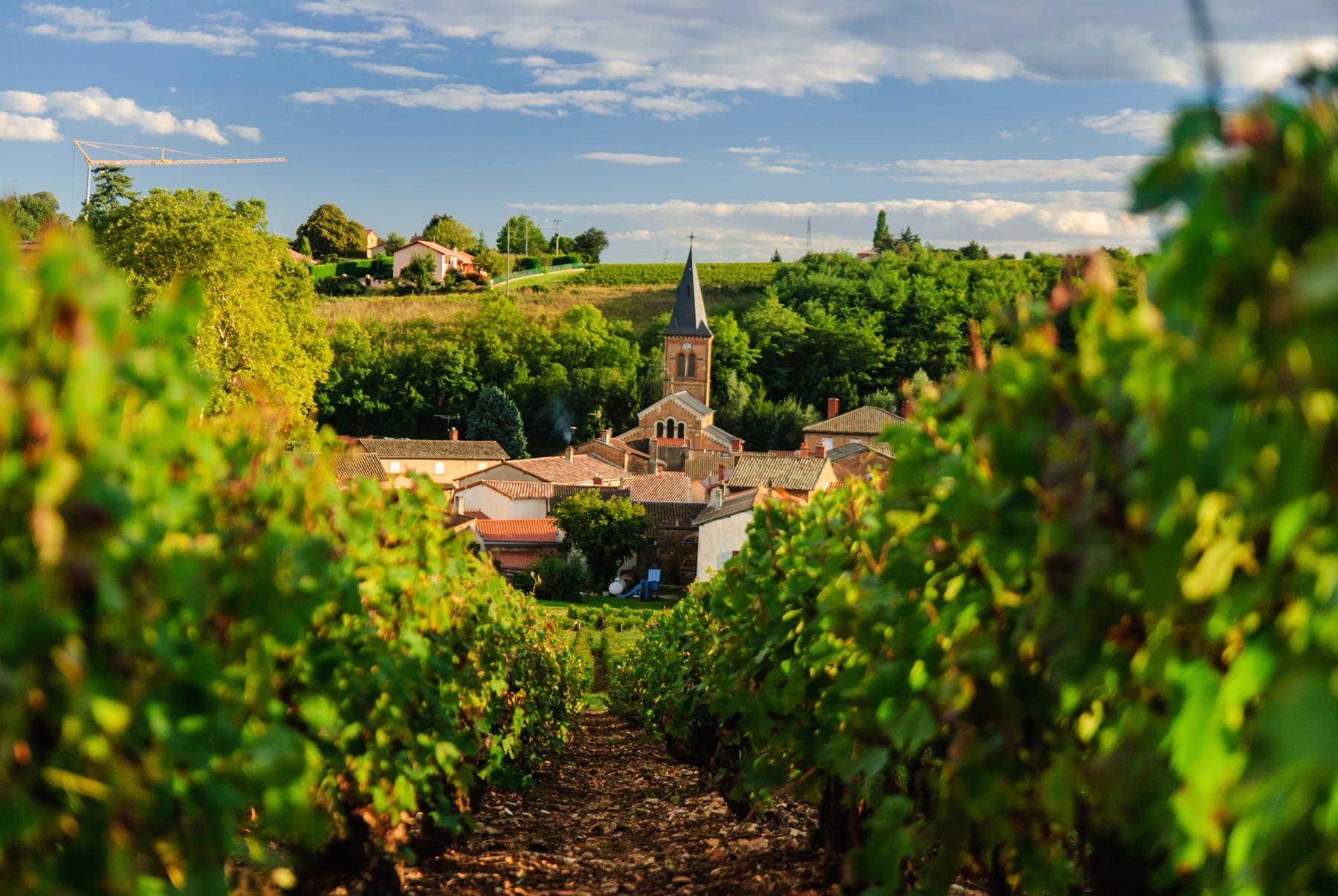 Vignoble français du Beaujolais