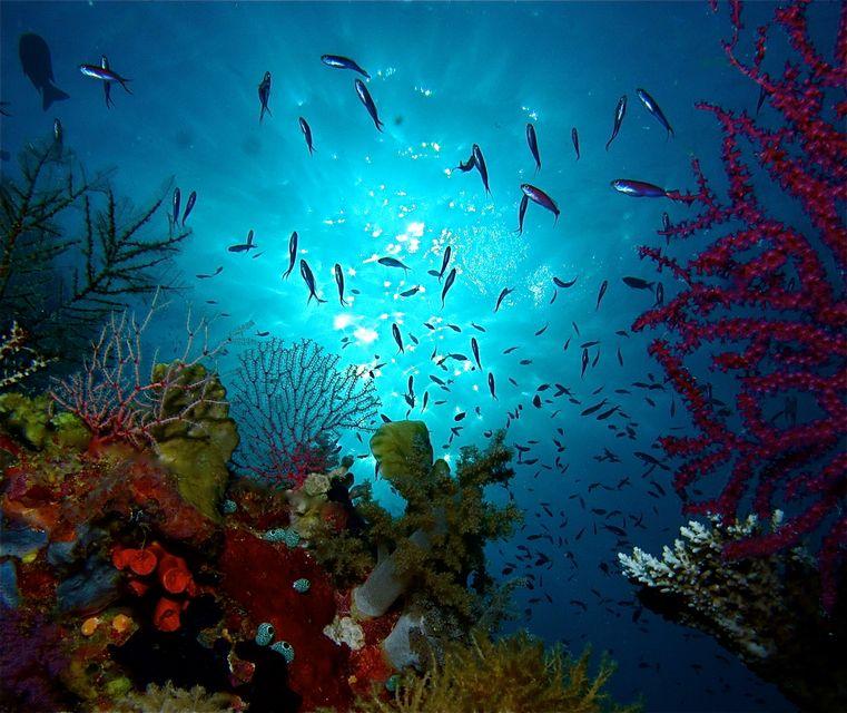 Die schönsten Reiseziele der Philippinen: Tubbataha-Riff, Palawan