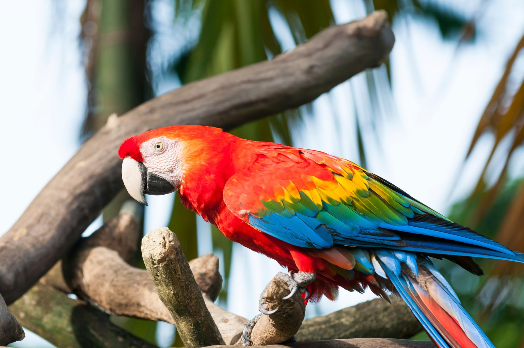 Maleny bird world has lots of exotic species