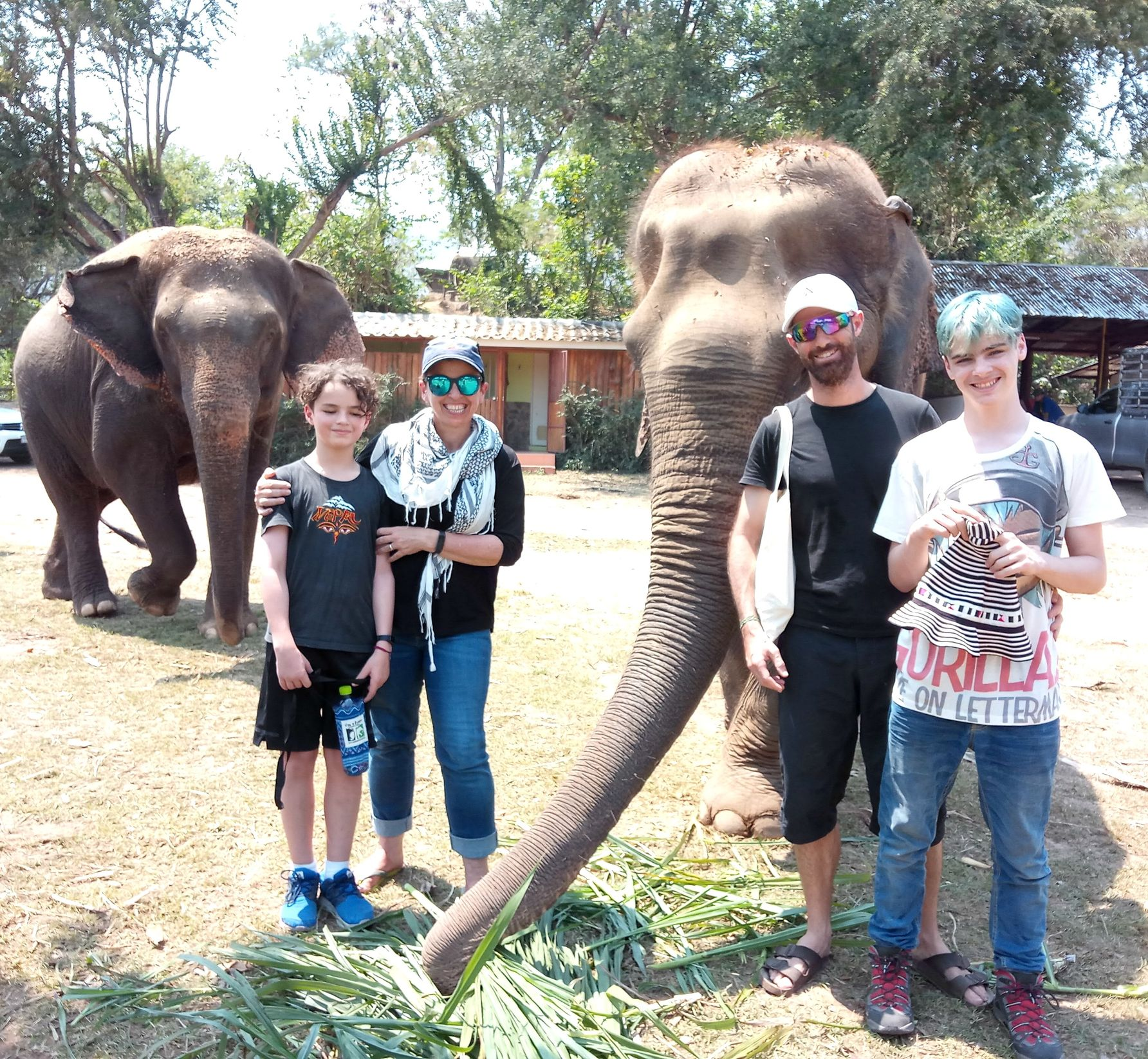 World Travel Family hanging out with elephants