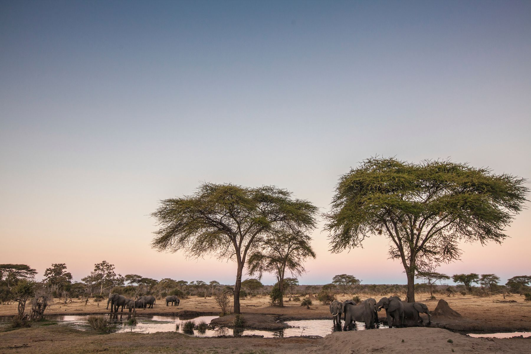 elephants bathing in the pond together in Kenya, a popular spot for travel in February. Always make sure to be a responsible traveller to see these gentle giants in their natural habitat