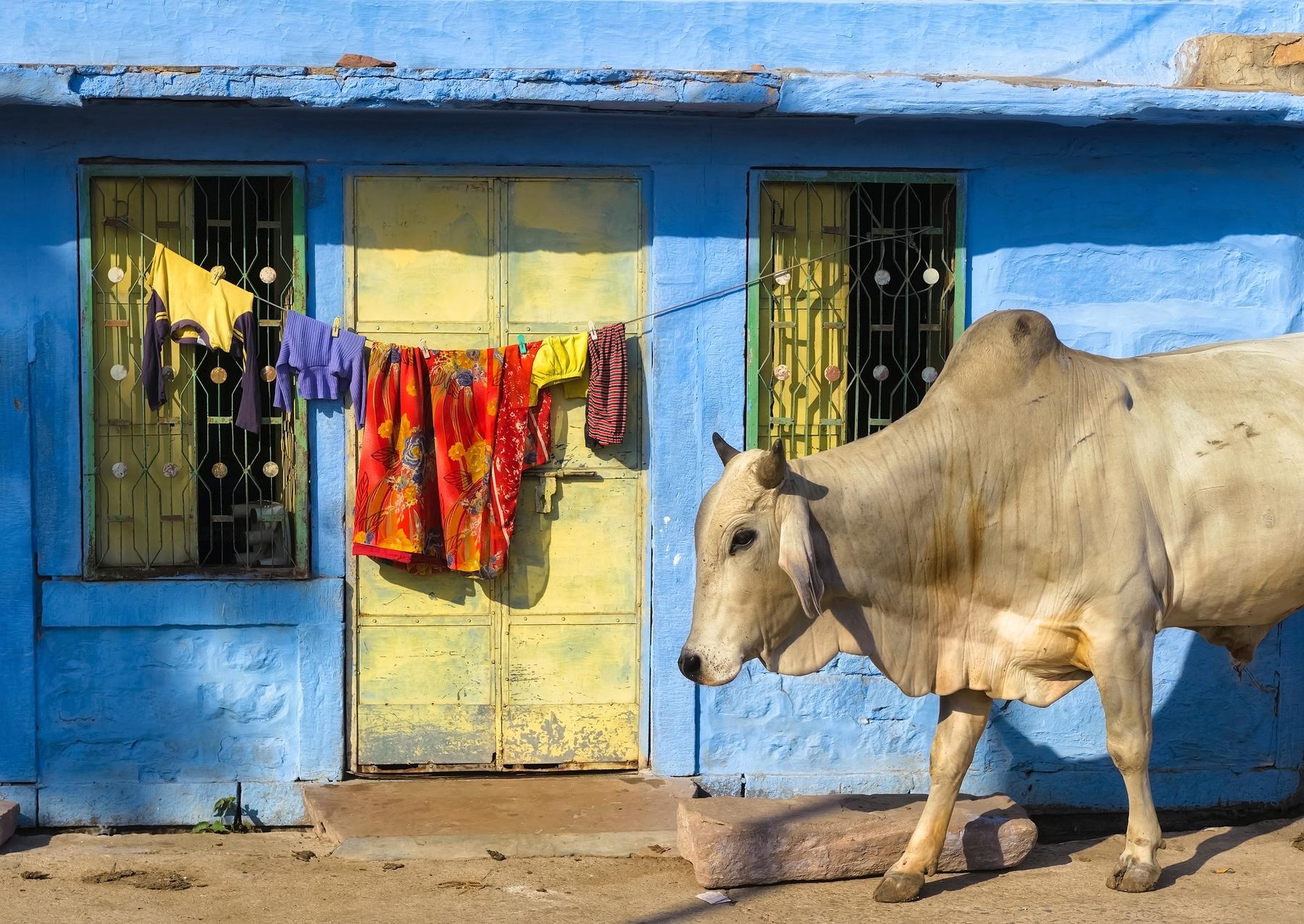 Самые яркие направления мечты: найти билеты в Индию