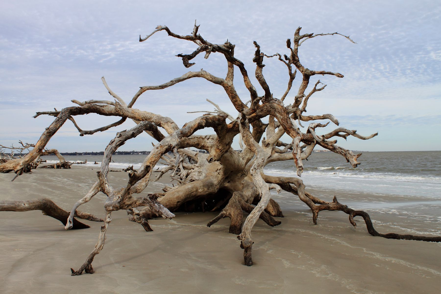 Washed up drift wood on a beach.