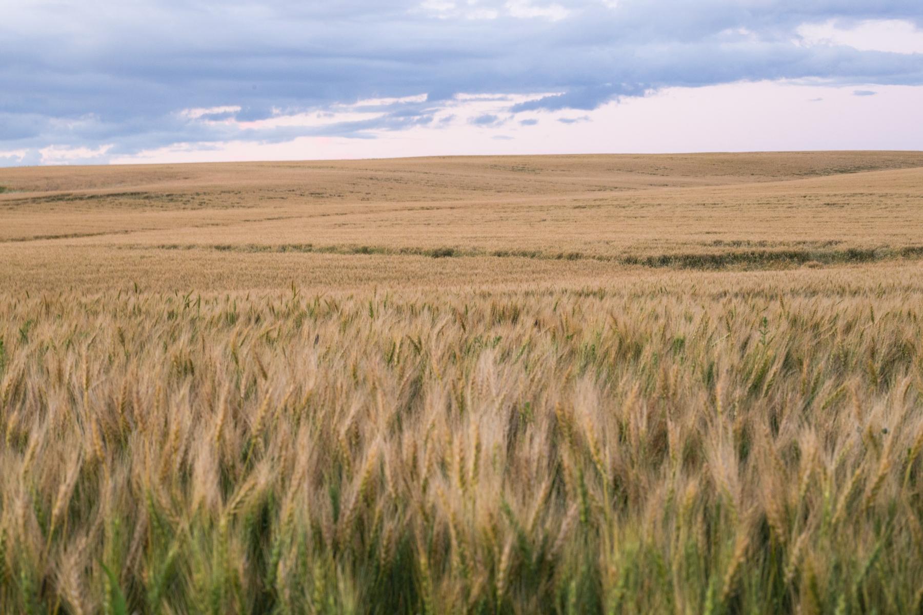 prairie land in Three Hills in Alberta. Blue cloudy sky in the background
