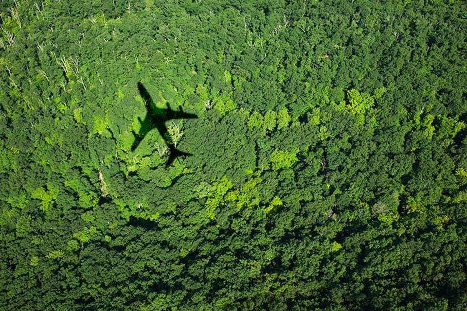 Cień samolotu na drzewach