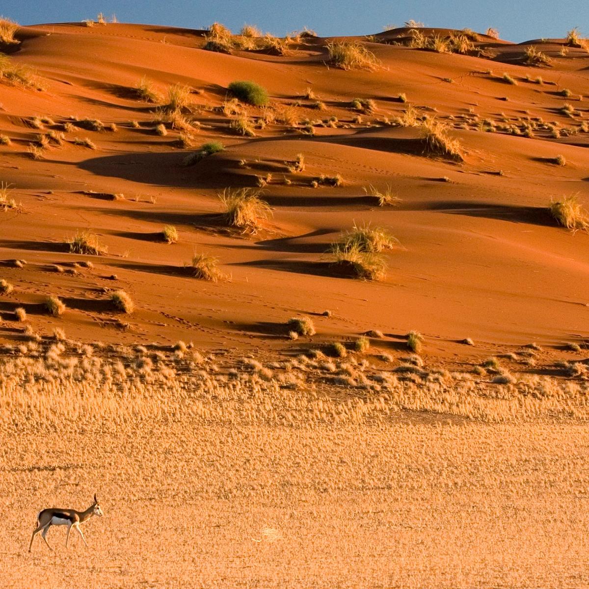 Die schönsten Reiseziele Afrikas: Namib-Wüste, Namibia