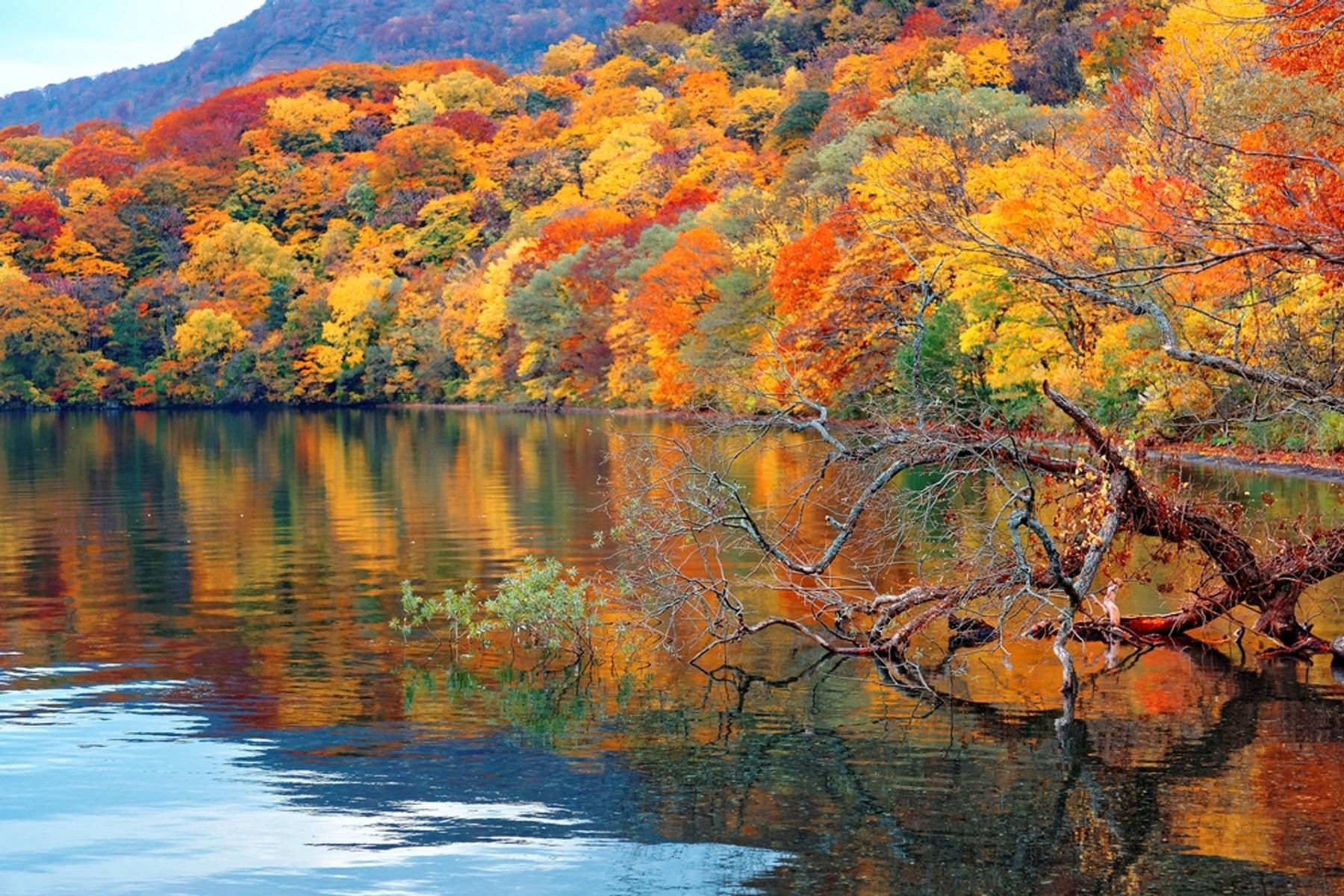 青森県 秋田県 秋の十和田湖の湖畔。紅葉した木々が湖に鏡のように映り込む