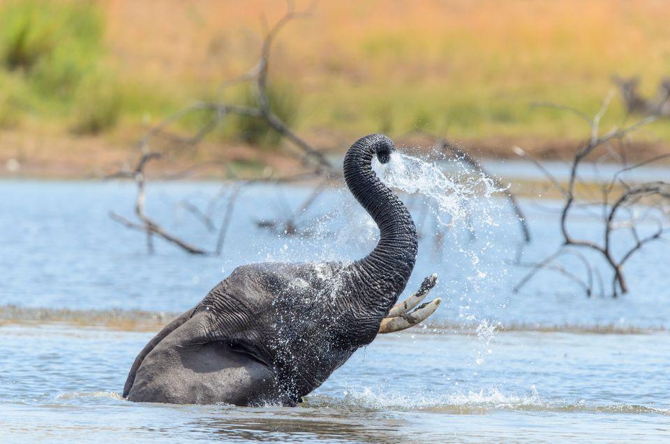 Die Top 10 Aktivitäten in Südafrika: Safari in einem der Nationalparks Südafrikas