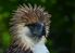 The mighty Philippine Eagle in Davao