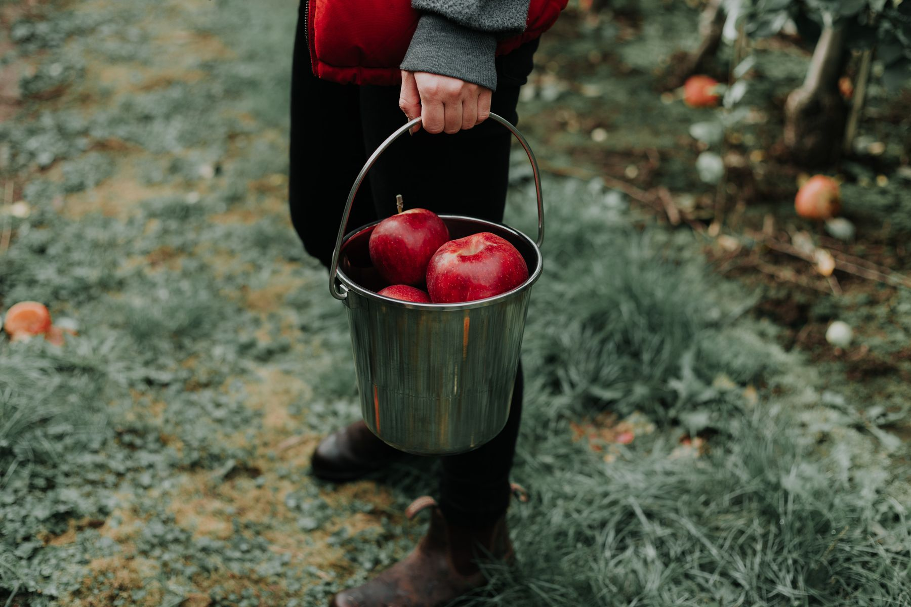 person holding a pail full of red apples
