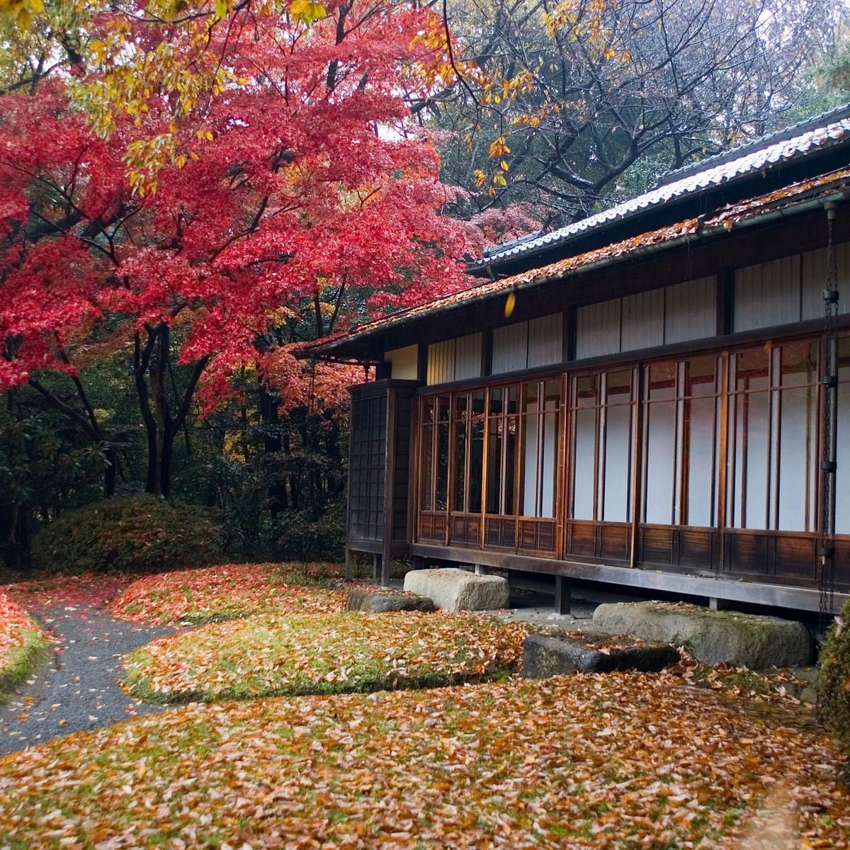 Reisen, die euer Leben verändern werden: Sprachreise in Japan