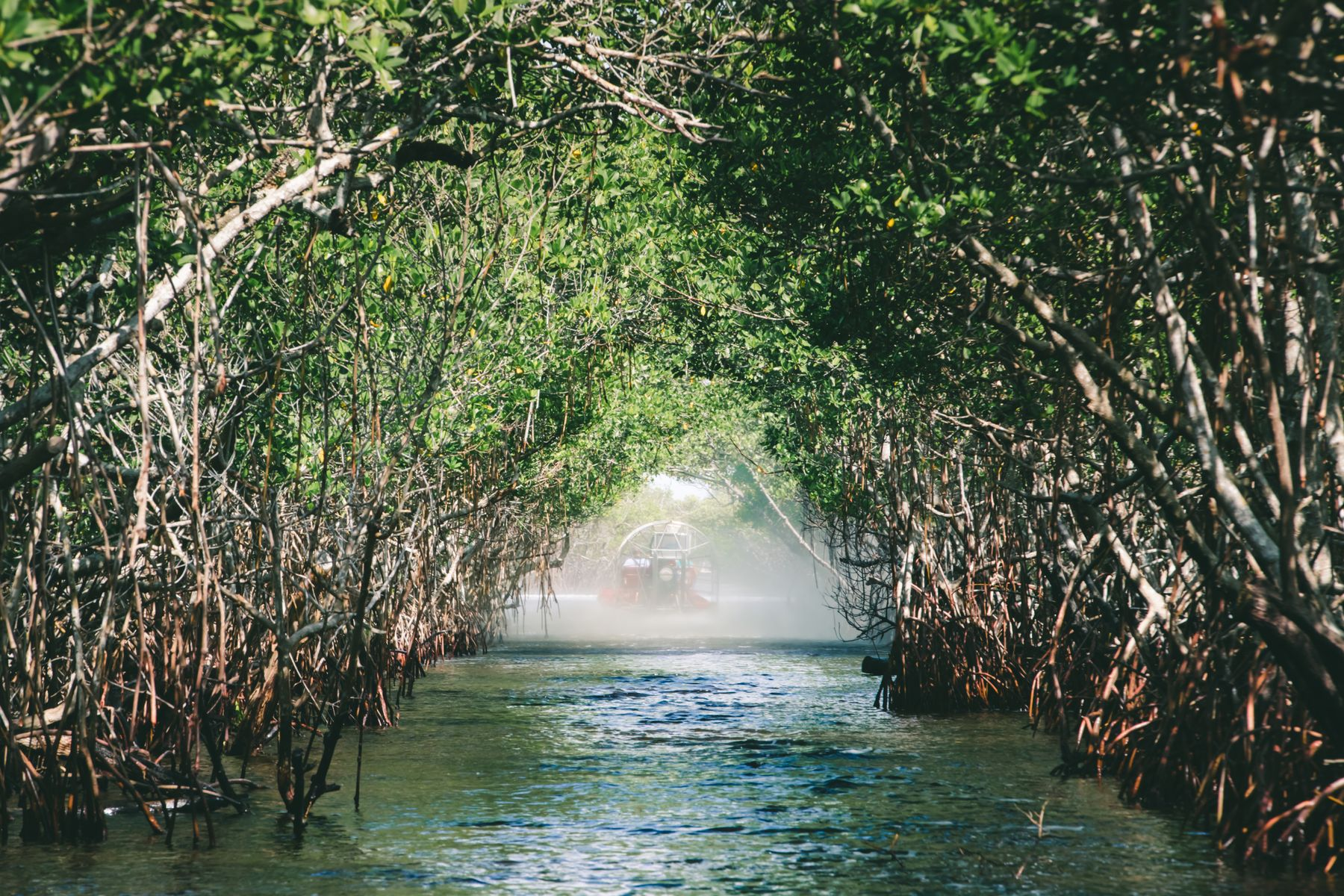 Mangrove trees over water with an airboat in the background. A destination for the National Parks Pass