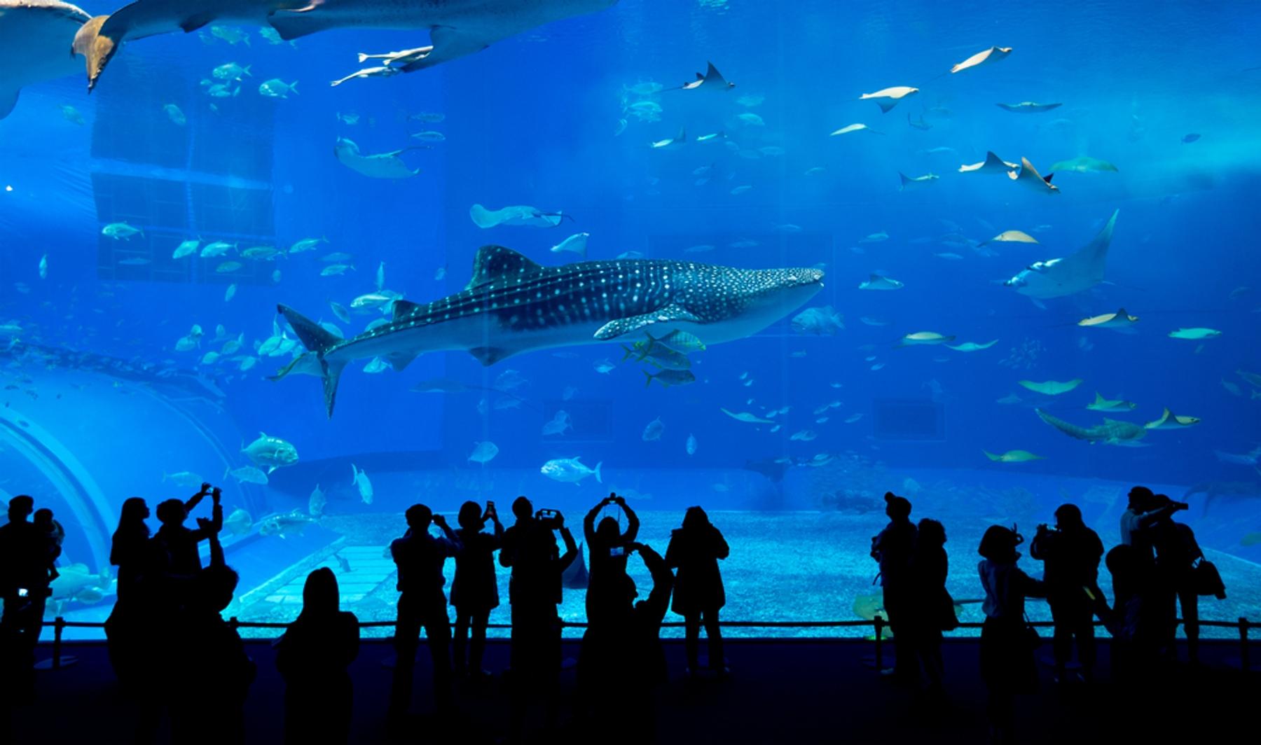 沖縄県 黒潮の魚たちを巨大アクリルパネルから一望でき迫力満点