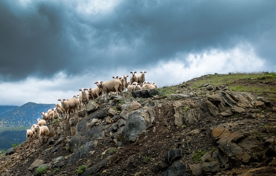 Πρόβατα στο βουνό