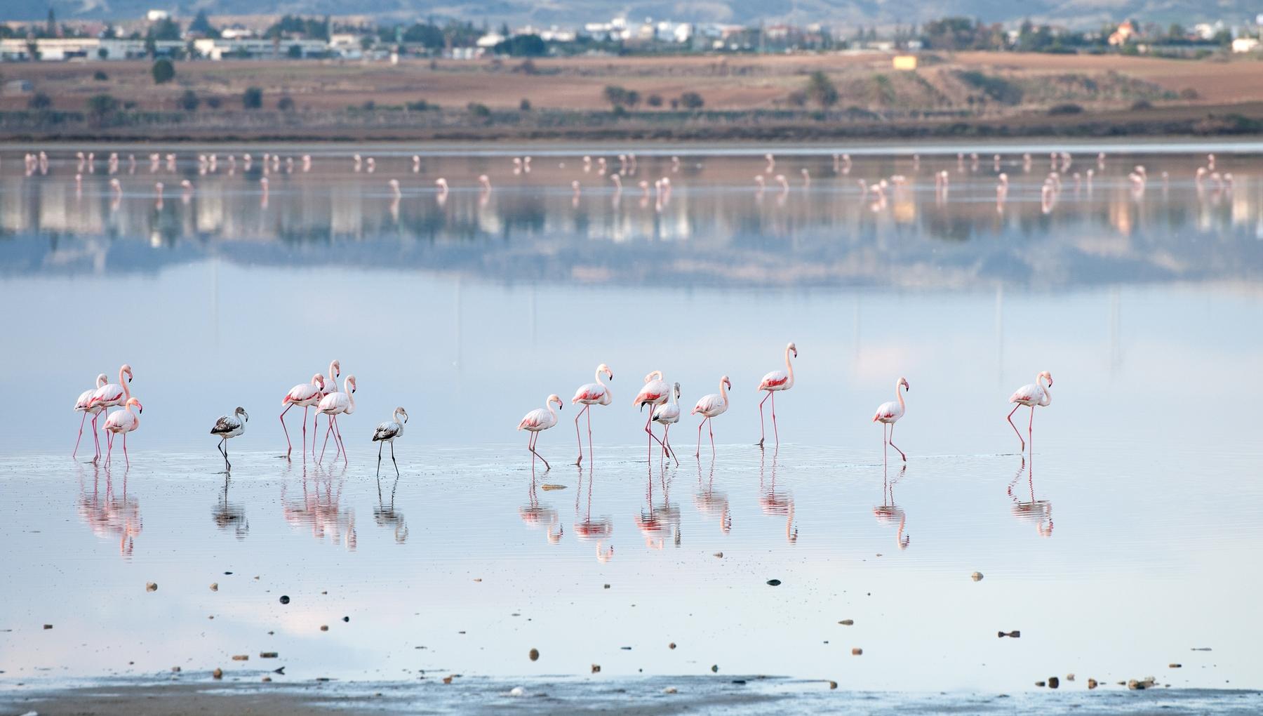 Куда можно полететь летом: недорогие авиабилеты на Кипр