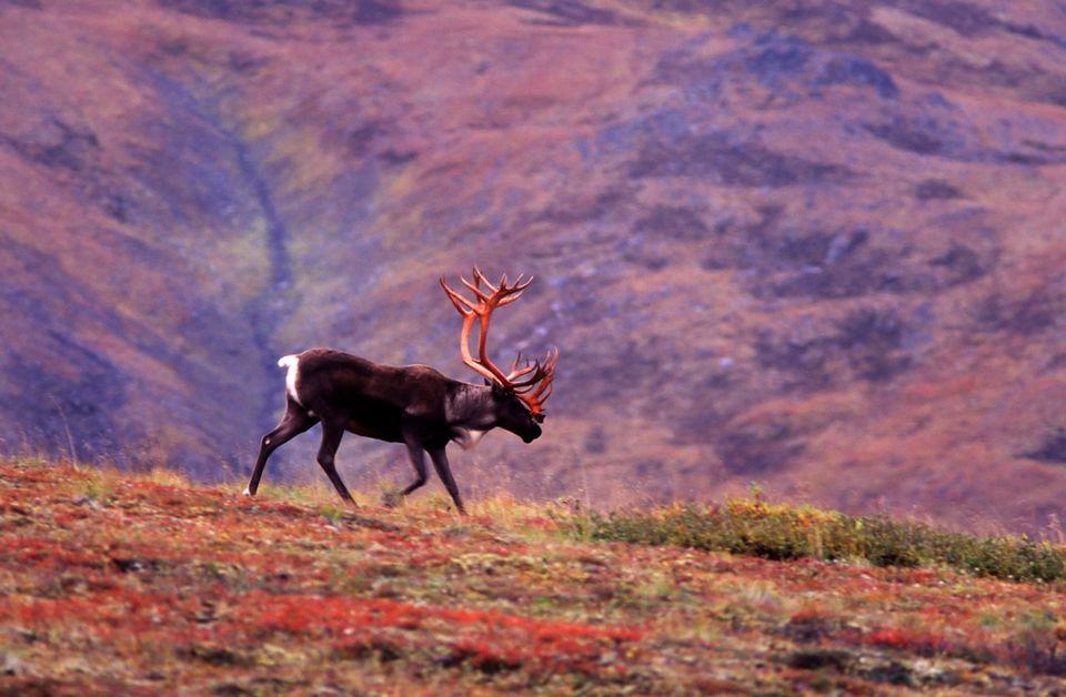 Национальный парк и заповедник Денали на Аляске