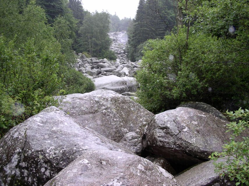 Vitosha Mountain is a great spot for spring and summer trekking - best things to do in Sofia