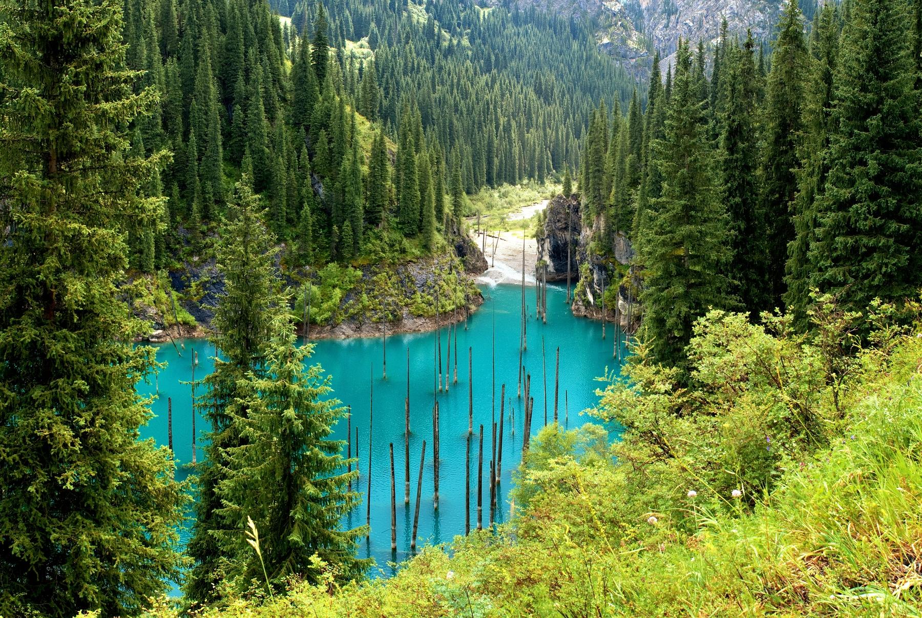 Подводный лес в Казахстане