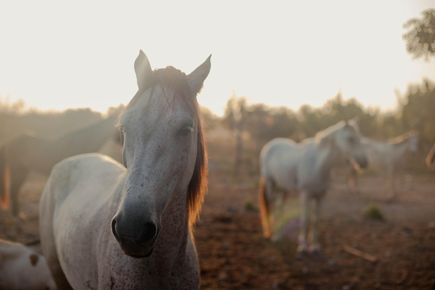 Лучшие идеи стейкейшена в России: отдых на Алтае и катание на лошадях в Чепош Парке