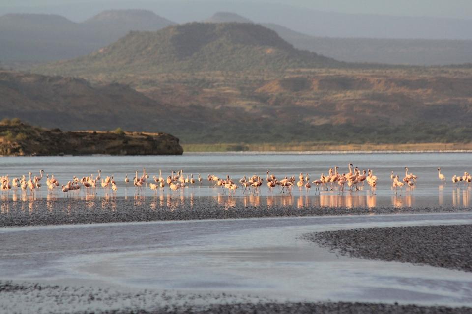 Πουλιά στο Εθνικό Πάρκο της Αρούσα, Τανζανία