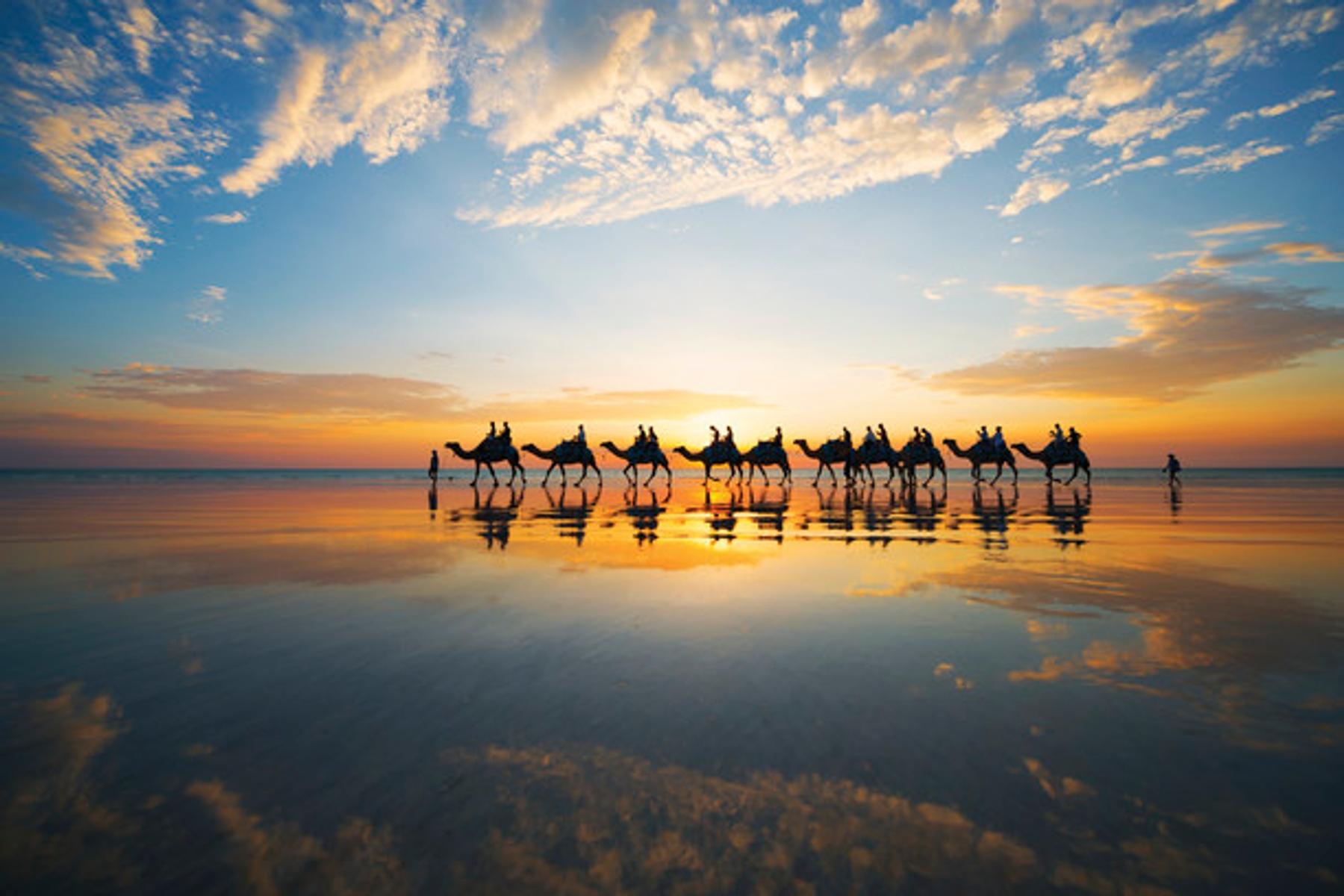 Караван верблюдов на пляже в Западной Австралии