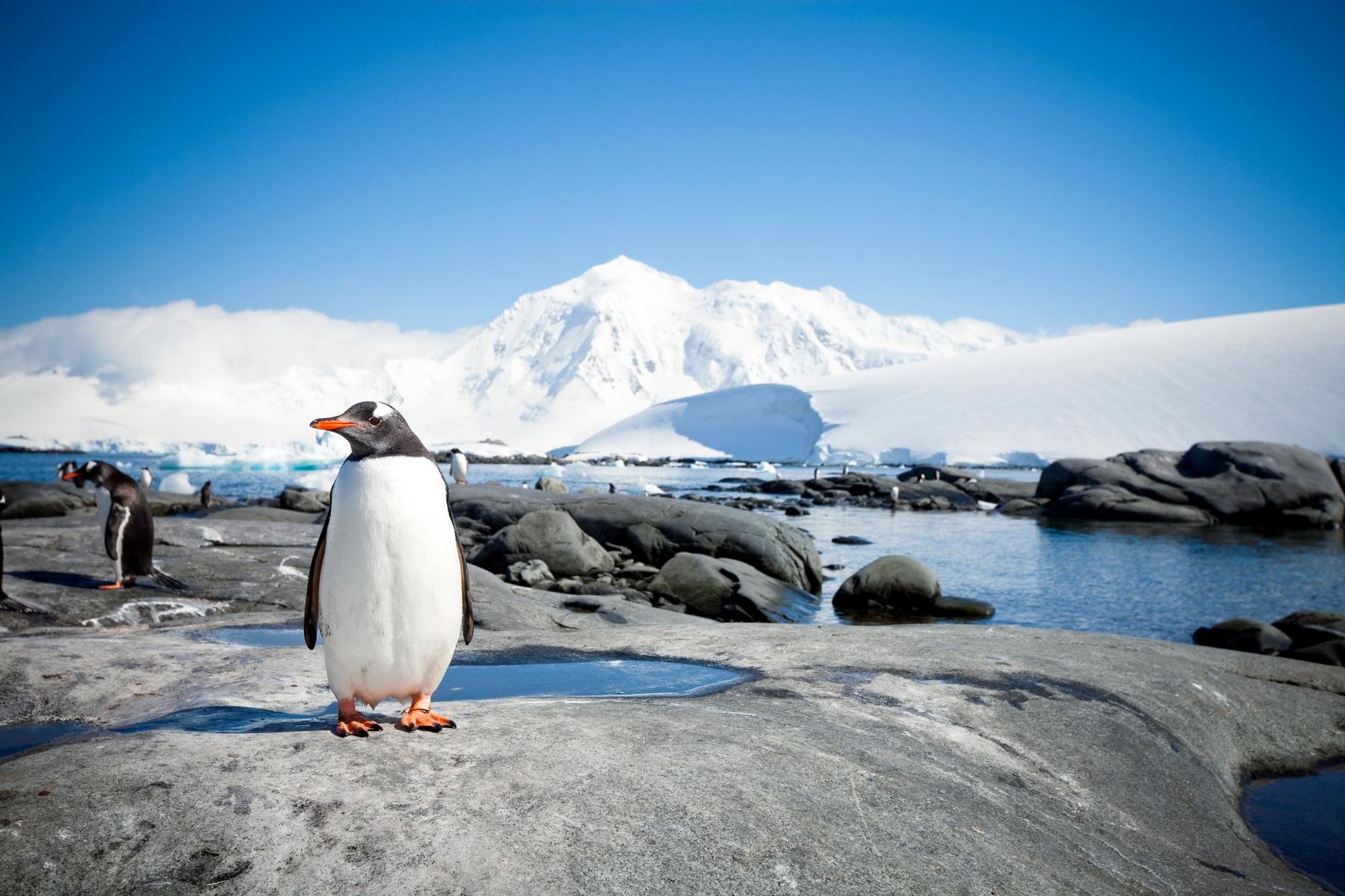 Expedition in die Arktis oder Antarktis