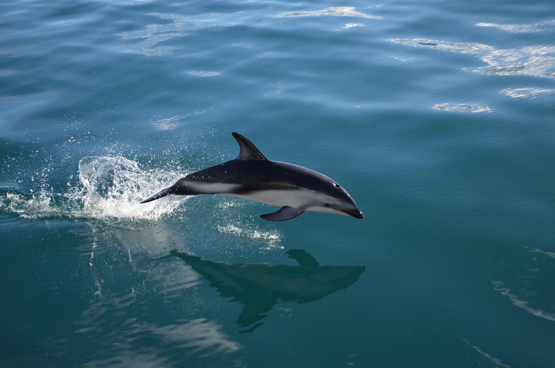 ou voir des dauphins en France