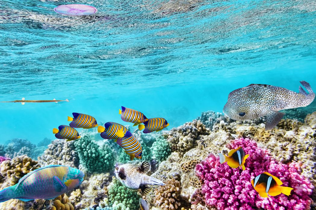 Egitto: mare
