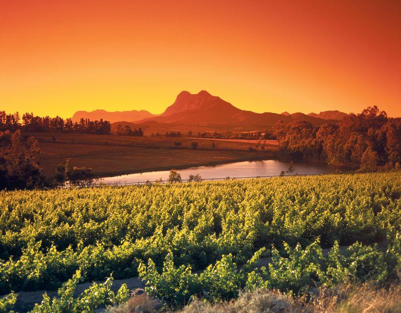 Die Top 10 Aktivitäten in Südafrika: Schlemmertour durch die Winelands
