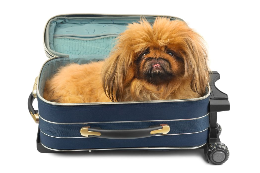 Dog in a bag - Flight approved pet carriers