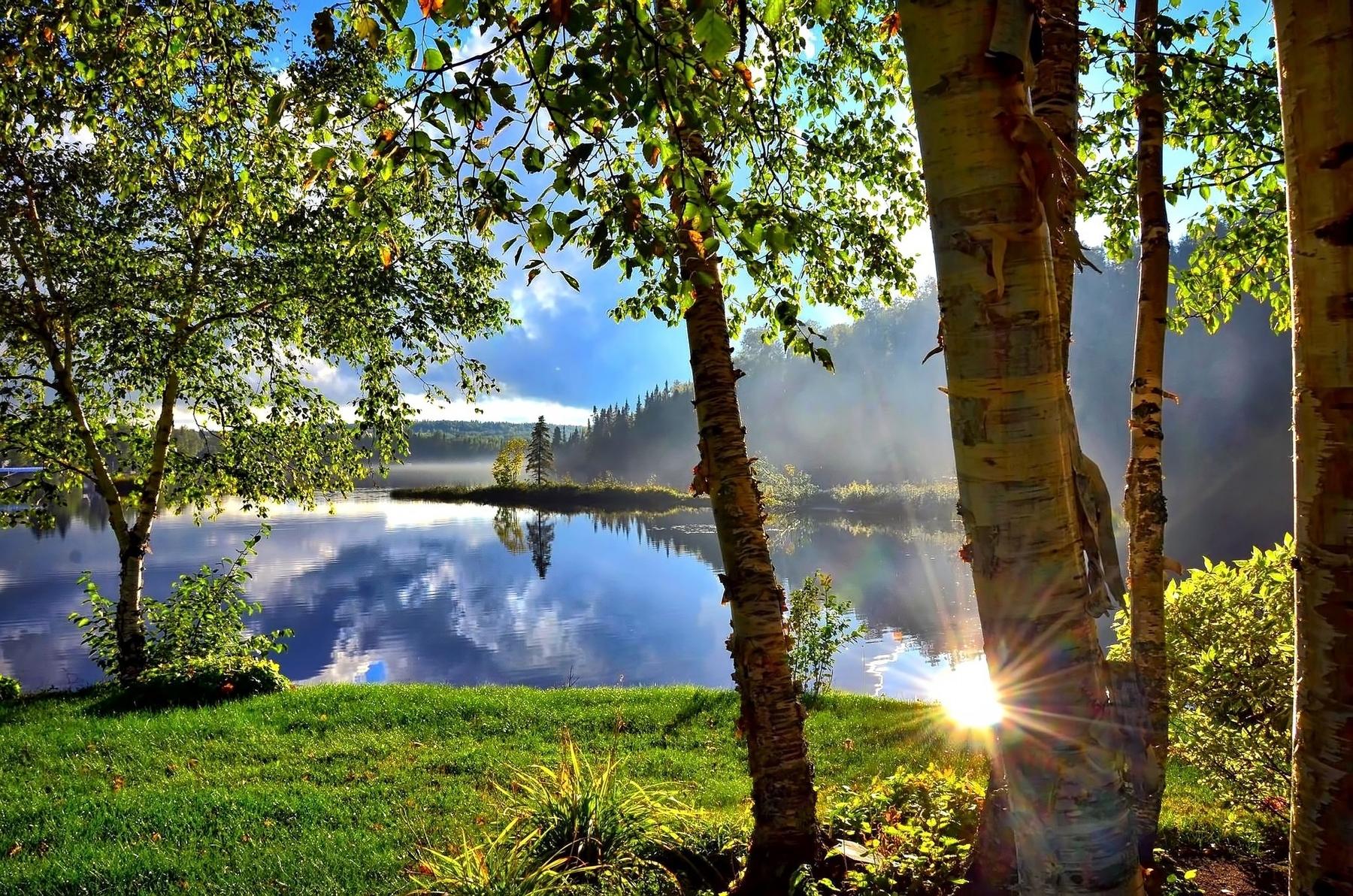 Озеро и лес с березами и елями